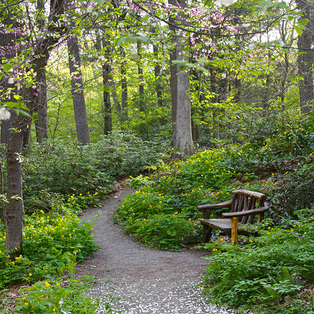 Garden in the Woods/ New England Wild Flower Society