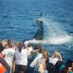 Boston's Best Cruises Whale Watch