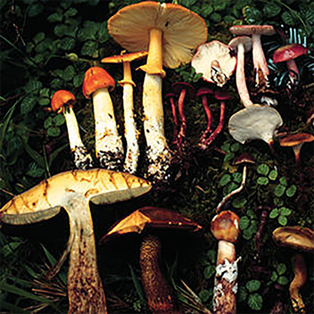 How Mushrooms Changed the World