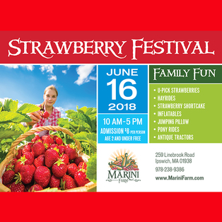 Marini Farm Strawberry Festival