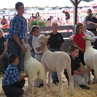Massachusetts Sheep & Woolcraft Festival