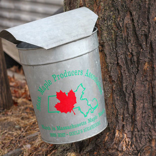Mass Maple Producers Association
