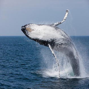 Whales & Wildlife Weekend Photo Workshop