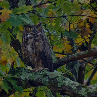 Owl Prowl Adventures for Adults