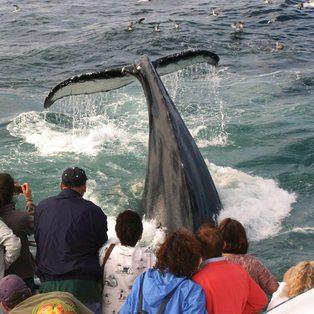 Captain John Whale Watching & Fishing Tours