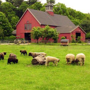 Mass Audubon's Drumlin Farm