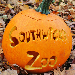 Zoo Boo Days
