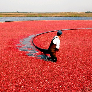 13th Annual Nantucket Cranberry Festival