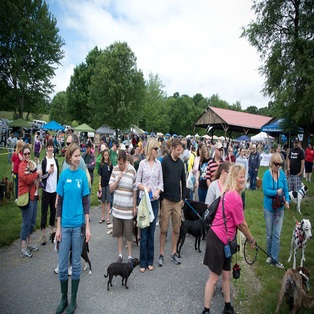7th Annual Whisker Walk Sunday June 8th 2014