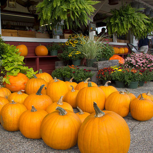 5 Things: Fall in Massachusetts