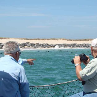 Monomoy Island Excursion